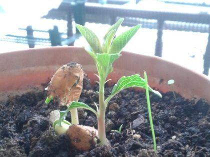 Árboles creciendo