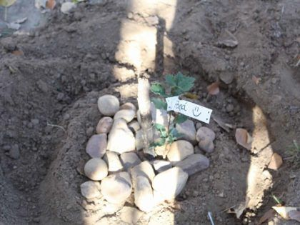 Plantando mi propio árbol