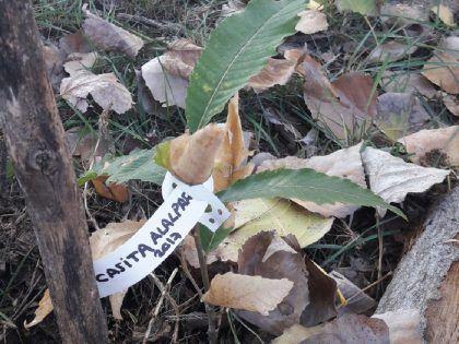 Casita Niños Alalpardo Plantando Árboles