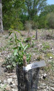 Árboles en La Chopera
