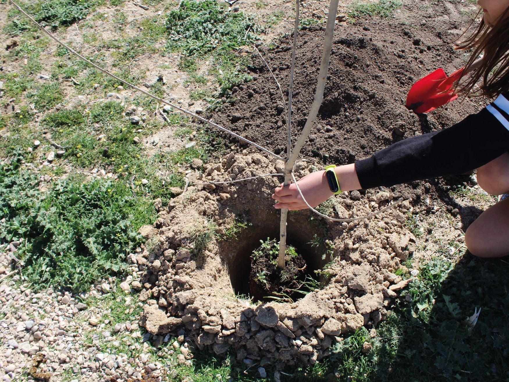 Plantando tu propio árbol